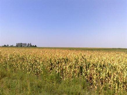 PNDR 2014-2020 primeste primele proiecte de finantare in sectorul agricol