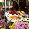 Festivalul Florilor 2013