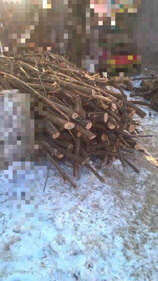 Depistați de jandarmi cu două căruțe de lemne tăiate ilegal