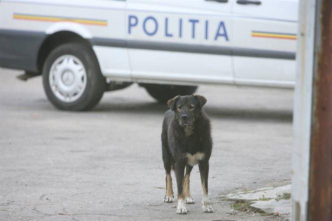 Campania de sterilizare a cainilor continuat si la sfarsitul acestei saptamani in cartierul Radu Negru