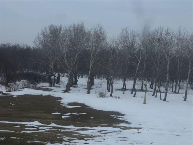 Copaci taiati pe marginea drumului