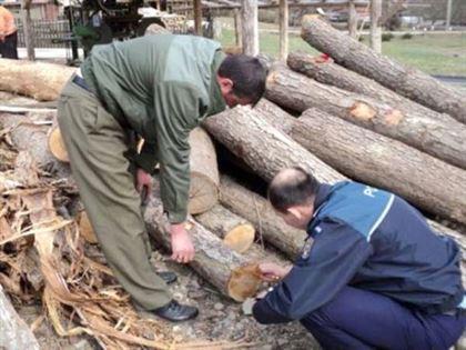 Dosar penal pentru taiere ilegala de arbori