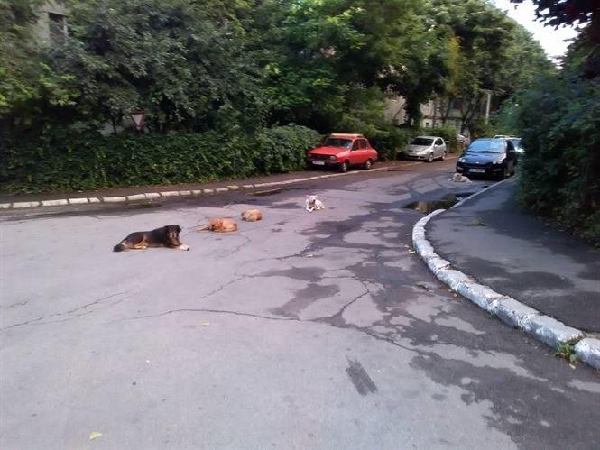 Primaria va continua sa stranga cainii de pe strazi si cauta medici pentru eutanasierea celor agresivi sau bolnavi