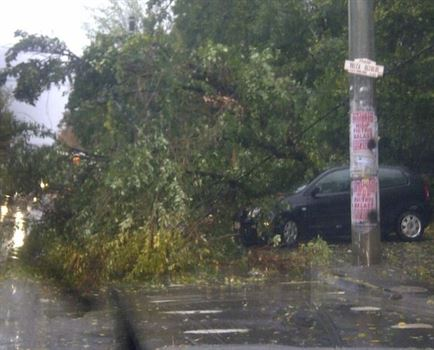 Furtuna de ieri a rupt doi copaci