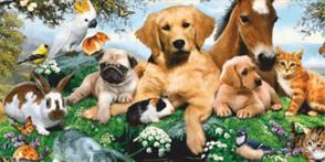 """""""Să descoperim lumea animalelor"""" la Biblioteca Judeteana"""