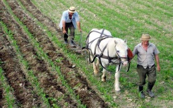 Ce au sperat si ce au recoltat fermierii
