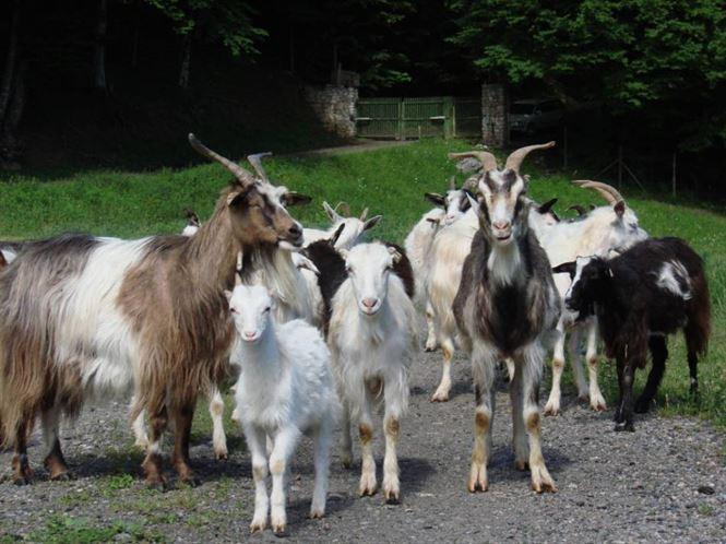 Cioban din Stancuta dat disparut
