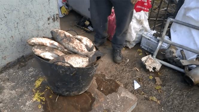 Peste 280 kg de pește fără documente, confiscat de polițiști