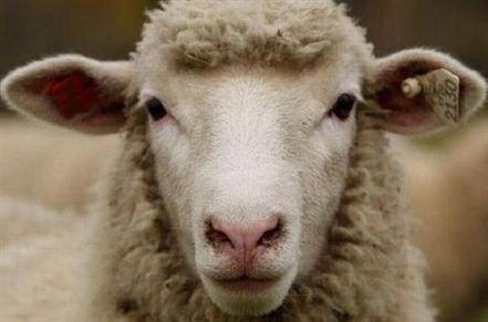 Acuzat de furtul a doua oi din curtea unei consatence