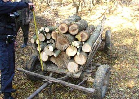 Prinsi de politisti in timp ce furau lemne din padure
