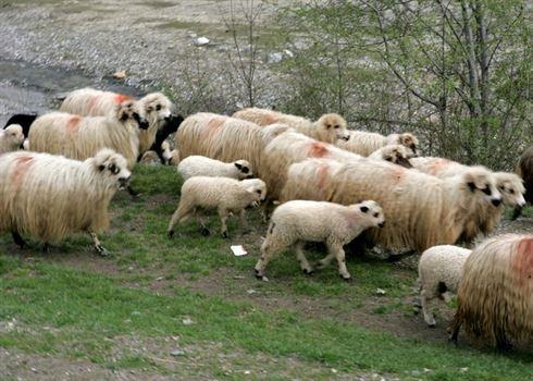 Politistii braileni i-au confiscate oile unui tulcean